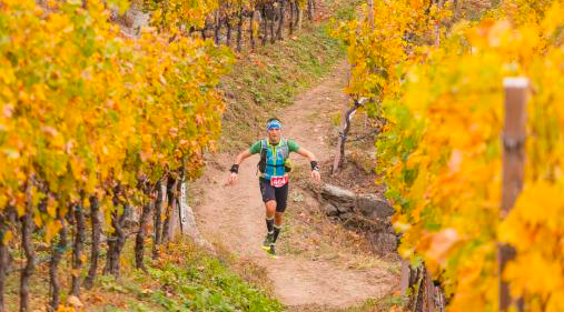 Running through the golden leaves of an Italian vineyard Copyright: Giacomo Meneghello